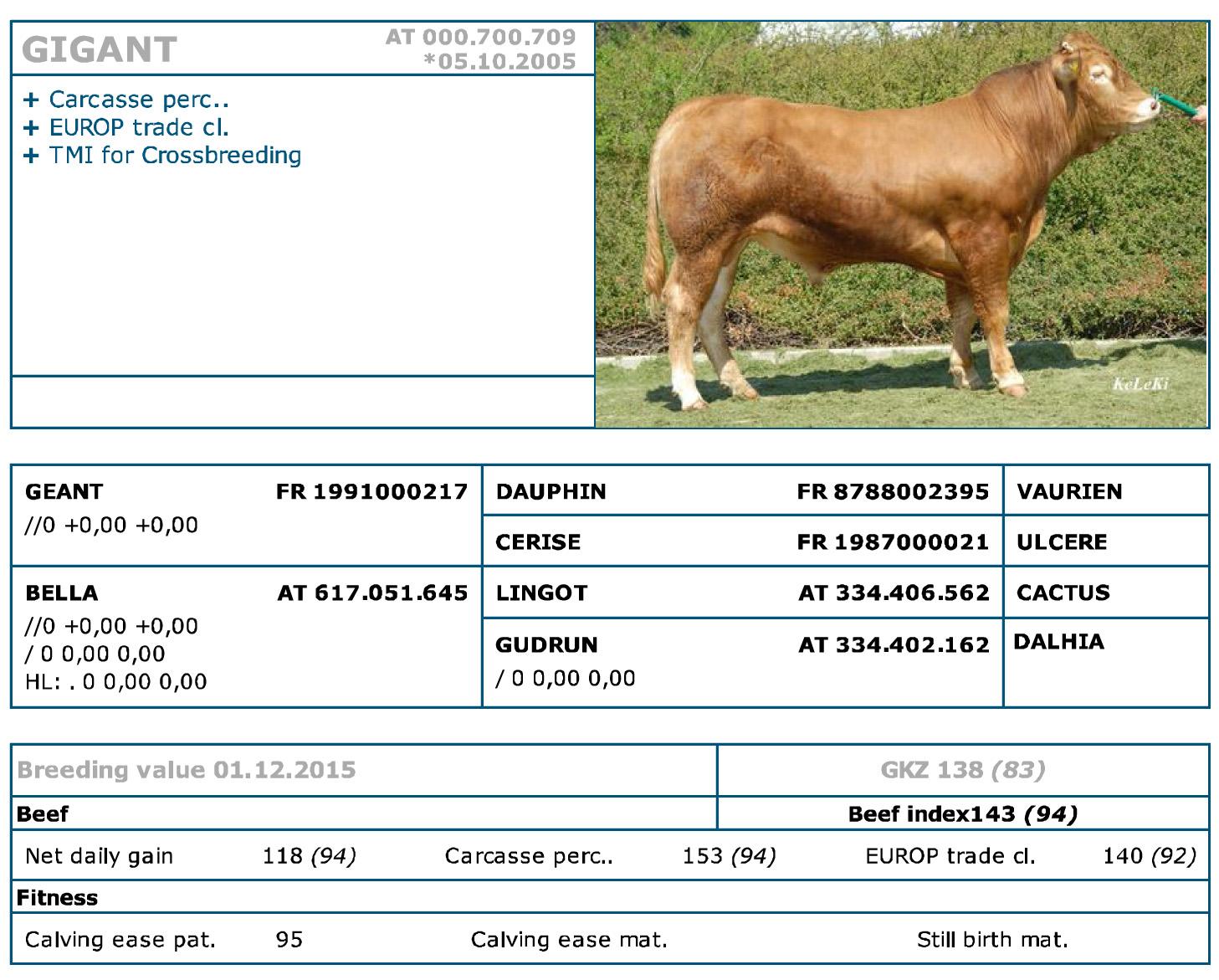 Limousin - Beef Breeds - Semen - geneti...ls, Bull, Rumba, Wille
